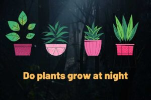 Do plants grow at night – Impact of darkness on plant growth