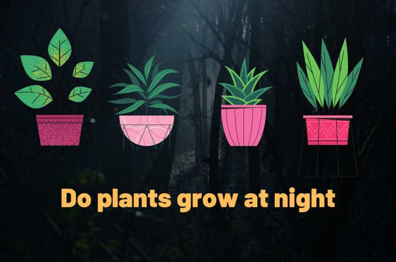 Do-plants-grow-at-night
