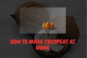 What is coco peat? How to make coco peat at home?