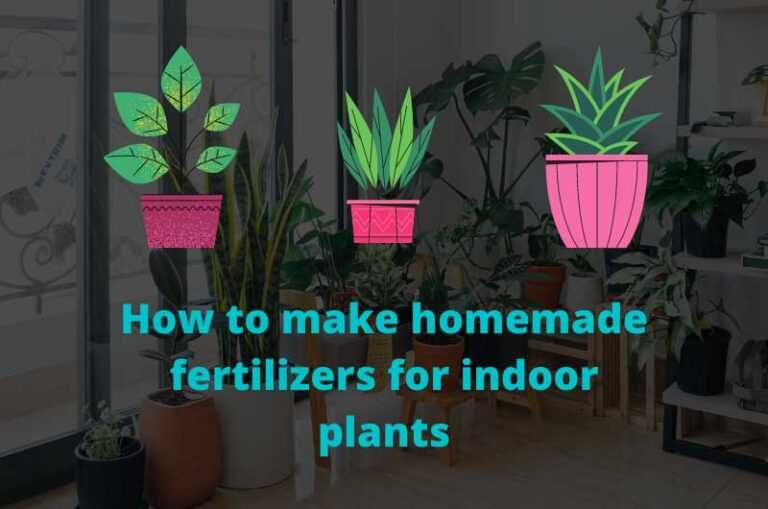 How to make homemade fertilizers for indoor plants
