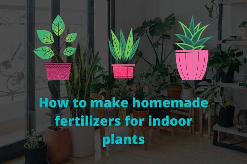How-to-make-homemade-fertilizers-for-indoor-plants