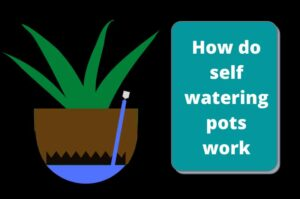 How do self watering pots work? Complete working principle