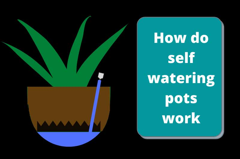 How Do Self Watering Pots Work Complete Working Principle Gardener S Point