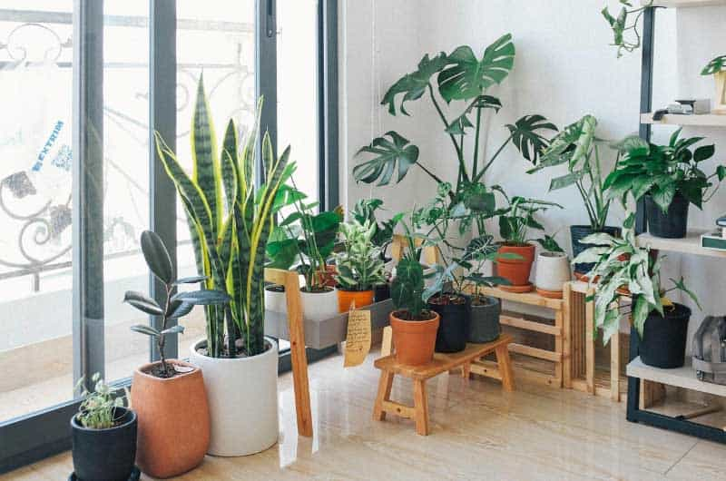 How-to-water-indoor-plants-while-on-vacation-