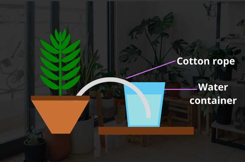 How-to-water-indoor-plants-while-on-vacation-simple-wick