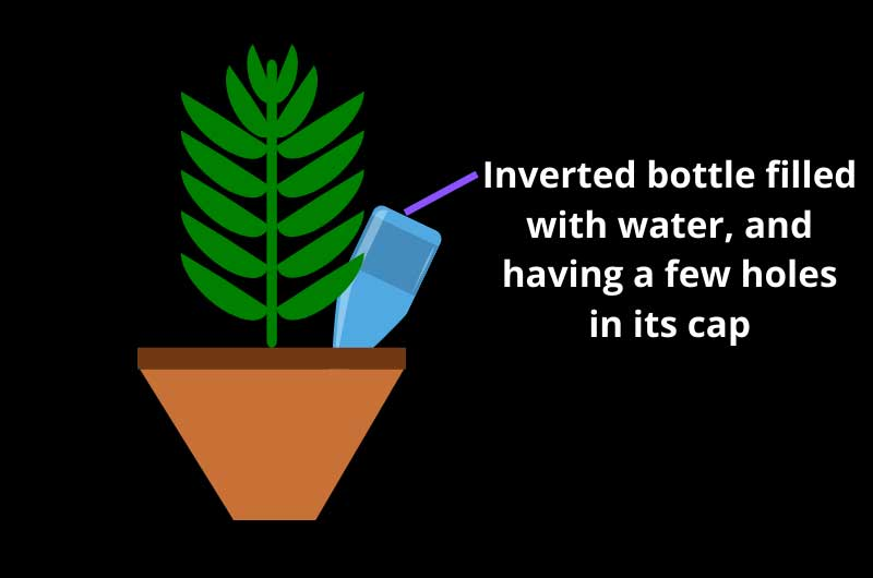 How-to-water-indoor-plants-while-on-vacation-bottle-drip-system
