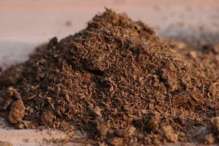 Sphagnum_Peat_Moss_for_potting_soil