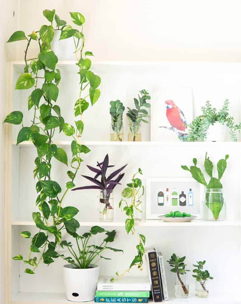 Why-is-my-Golden-pothos-not-growing-